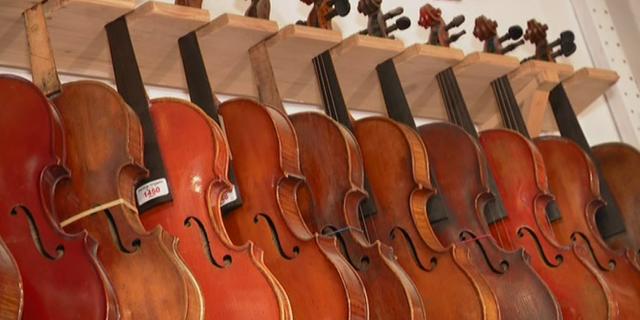 Lutherie : l'épicéa rouge, le bois de prédilection du Stradivarius menacé en Italie